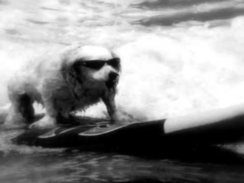 Surf Guitar On Tumblr