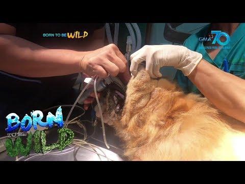 Born To Be Wild: Doc Ferds Responds To Animal Emergencies Amid Enhanced Community Quarantine (ECQ)