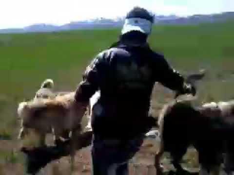 Özalp eski emek cılgın çobanlar