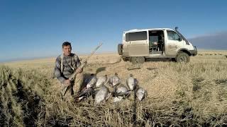 Охота на гуся в Казахстане Костанайская область осень 2019 года