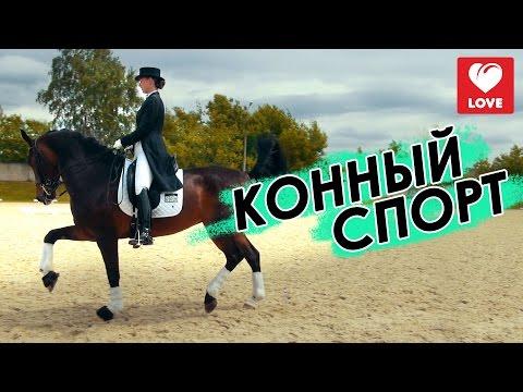 знакомства конный спорт