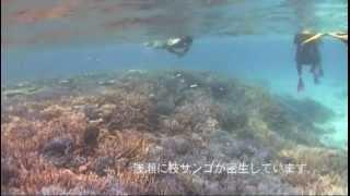 石垣島シュノーケリングサンテン⇒http://www.san-ten.net 竹富島のシュ...