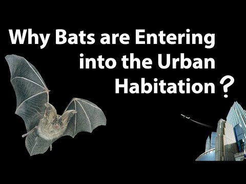Why Bats are migrating in urban area - Can it spread Nipah & Hendra viruses? Current Affairs 2018