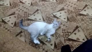 Самая умная кошка!!!