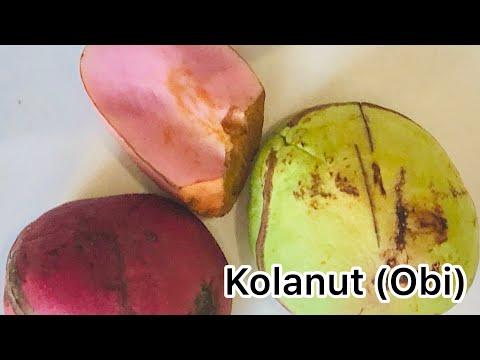 Baixar Kola Nut - Download Kola Nut | DL Músicas