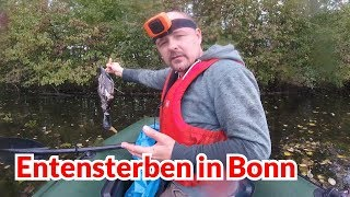 Entensterben in Bonn - Tiernotruf #114