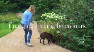 Treasure Hunt Enrichment Game For Dogs