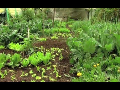 Alelopat a c mo hacer agricultura org nica finca for Alelopatia en hortalizas