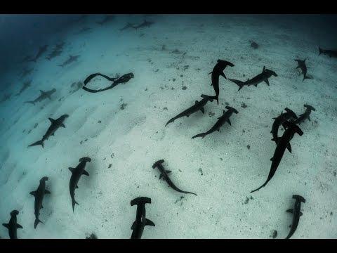 Galapagos Evolution 2016 - Teaser Guillaume Néry