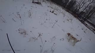 Охота #139 с гончими, заяц, лиса, козы