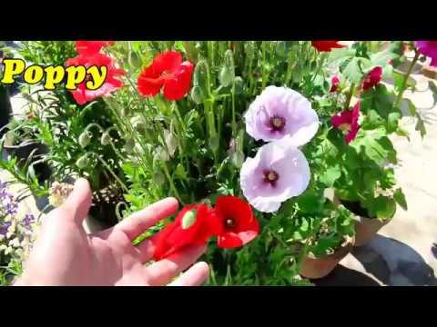 Popular Winter Flowers Part 1 Urdu Hindi Youtube