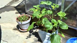 Home Garden Organic Vegetable Greenhouse System