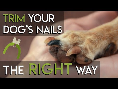 How to Trim Dog Nails - The RIGHT Way