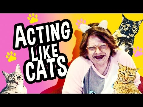 ACTING LIKE CATS