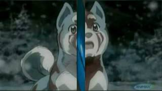 Balto/Ginga Weed/Gin -- AMV -- Never To Late *REQUEST*