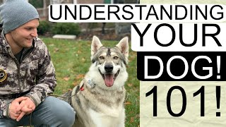 How to correct your dog's bad behavior | Understand your dog useful clues to understand your dog