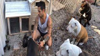 Pitbull köpeklerimi yeni civcivlerimle tanistirdim Çok  stresli bir video oldu!