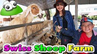 น้องติณณ์ | พาเที่ยวฟาร์มแกะEP.1☺ Swiss Sheep Farm