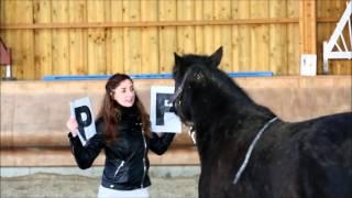 black beauty et charlotte - jeux d'eveil,apprentissage lettres alphabet