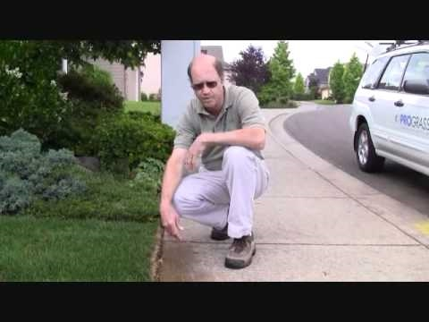 Prograss Presents New Lawn Care Youtube