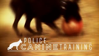 Columbia Police Canine Training