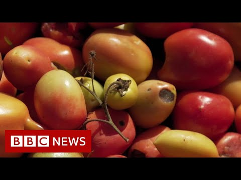 What Have Tomatoes Got To Do With Climate Change? - BBC News