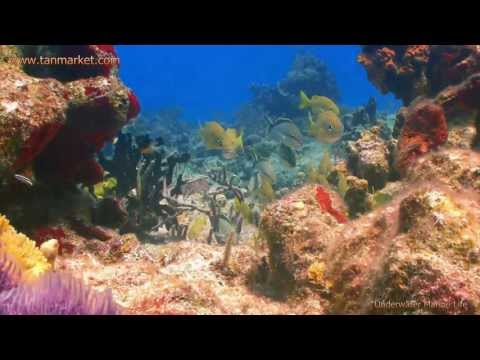 Underwater Marine Life 2, HD Collage Video - youtube.com/tanvideo11