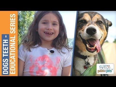 Dogs Teeth - Educational Series - Paleo Pets