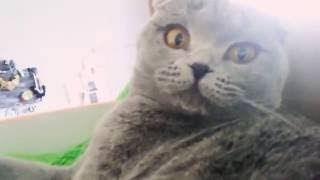 My cat Tiffany. Моя кошечка Тифанни.