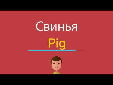 Как свинья по английски