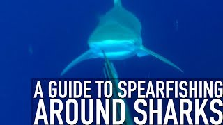 Guide to Spearfishing around Sharks - Trailer