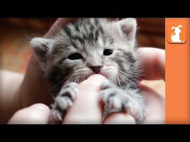 Precious Baby Kitten Nibbles on Fingers - Kitten Love