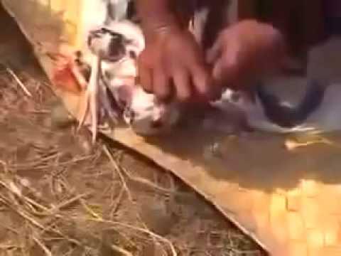 Cambodian magician