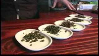 Oolong Teas : What Is Oolong Tea?