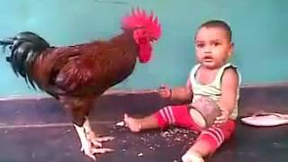 Kerala Funny Videos Chicken And Baby