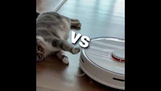 고양이 vs 로봇 청소기