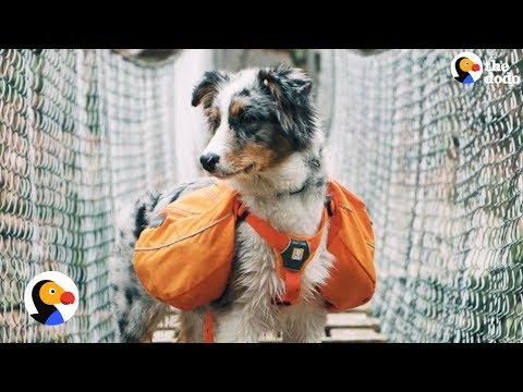 Dog Loves Going On Adventures With His Dad | The Dodo