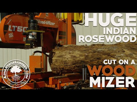 Cutting Huge Indian Rosewood log on Wood-Mizer LT50