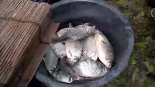 ป. ปลาตากลม แบบ บ้านๆ ณ บ้านหนองคัน