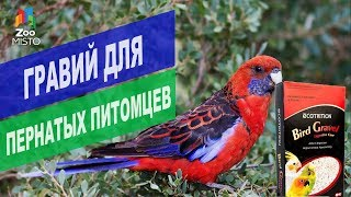 Гравий для птиц | Обзор гравия для птиц от 8в1