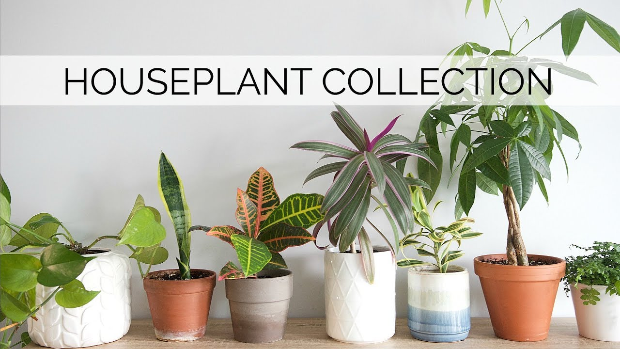 My Houseplant Collection 12 Easy Low Maintenance Plants