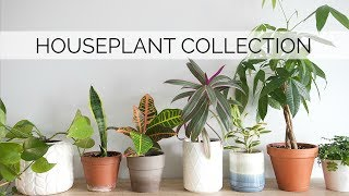 MY HOUSEPLANT COLLECTION | 12 easy & low-maintenance plants