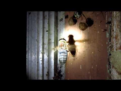 Spider Caught Horsefly