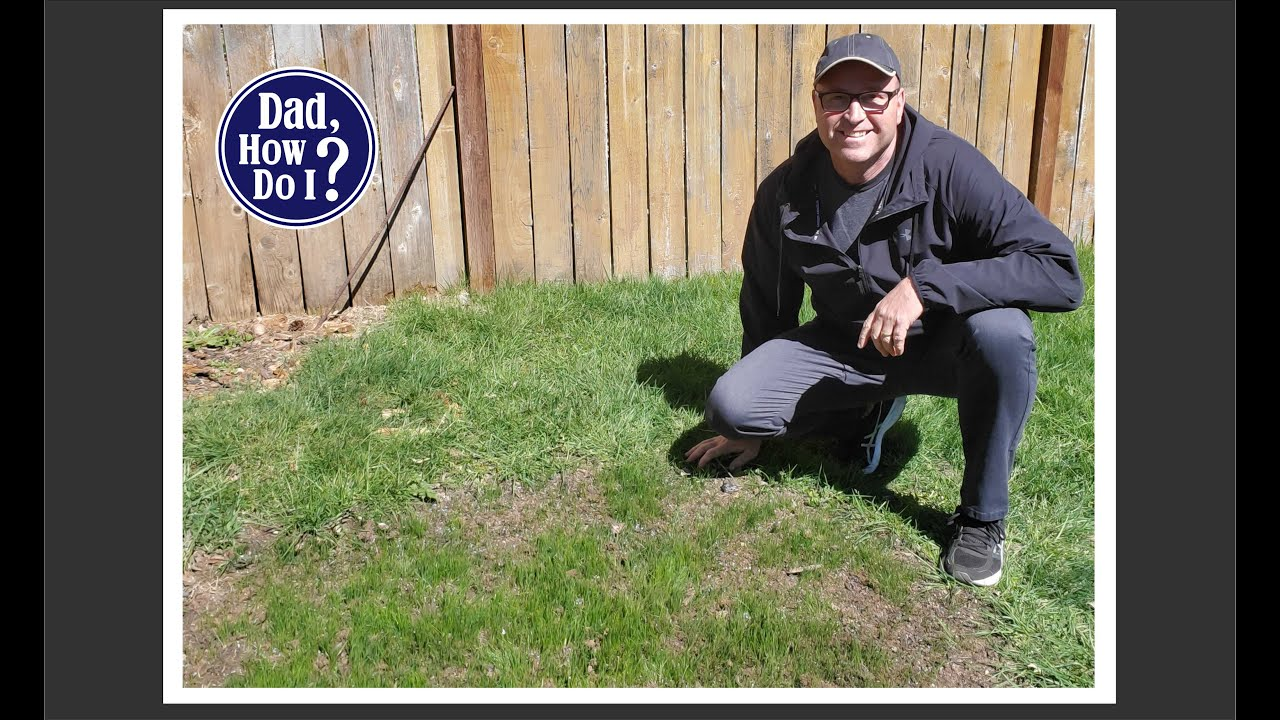 How to Plant Grass Seed | Dad, How Do I?