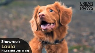 Dog Training: Laula (Nova Scotia Duck Tolling Retriever)