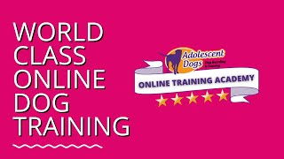 Online Dog Training Academy - NOW OPEN