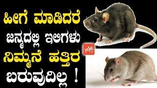ಹೀಗೆ ಮಾಡಿದರೆ ಜನ್ಮದಲ್ಲಿ ಇಲಿಗಳು ನಿಮ್ಮನೆ ಹತ್ತಿರ ಬರುವುದಿಲ್ಲ ! | Rat Control Home Remedies in Kannada
