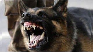 Cr1tikal beats his dog until it turns feral