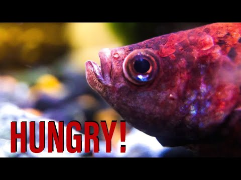 Vacation Fish Feeding No Food For A Week Youtube