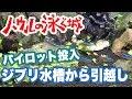 【ジブリウム】ハウルの泳ぐ城 ジブリ水槽から生体お引っ越し!! #9